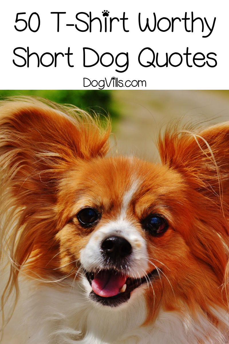 50 Short Dog Quotes That Are Totally T Shirt Worthy Http Www Dogvills Com