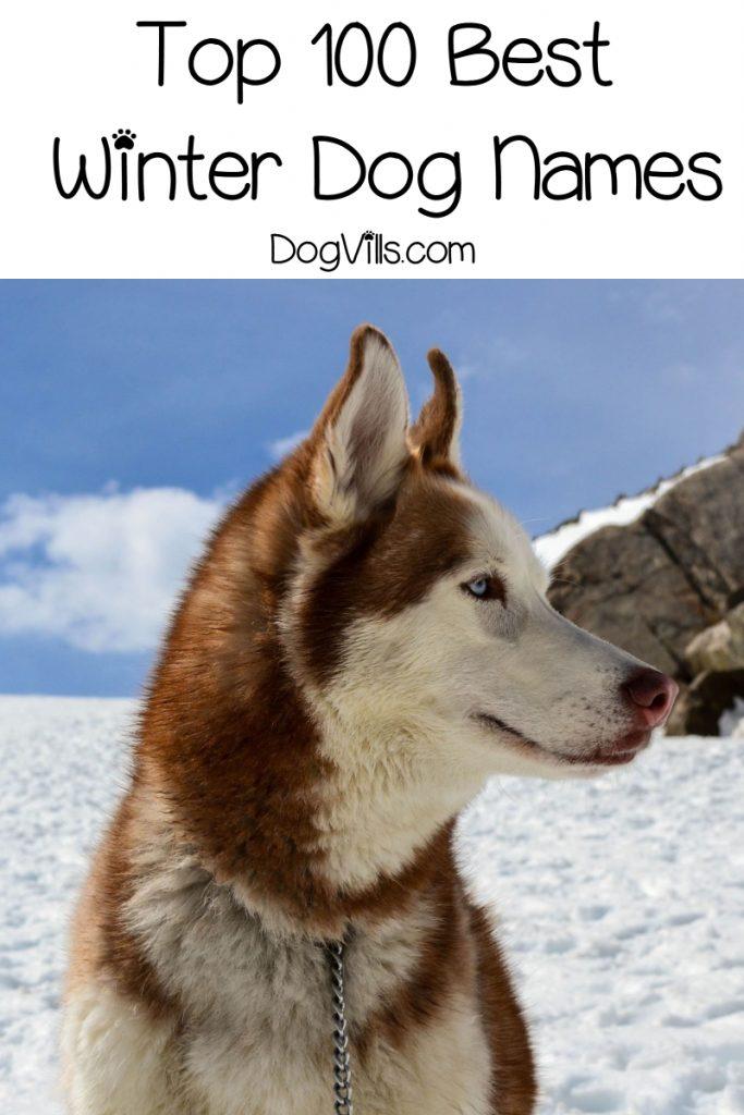 100 Wonderful Winter Dog Names Http Www Dogvills Com