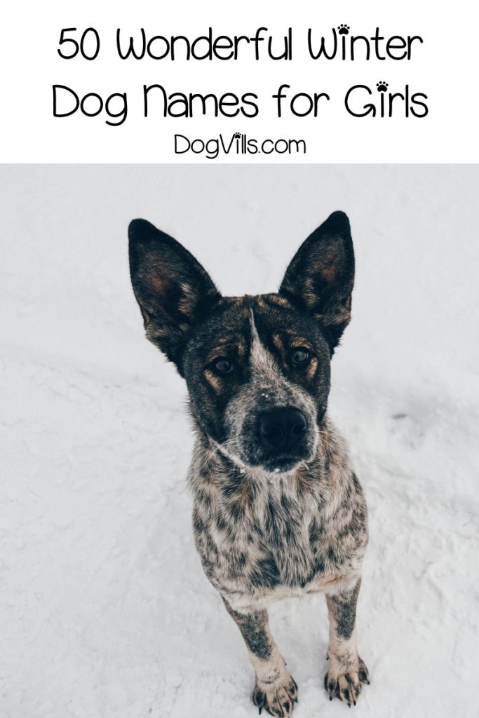 If you're bringing home a new pup during the coldest months of the year, you'll love our winter dog names! Check out 50 just for girls, then keep reading for boy names.
