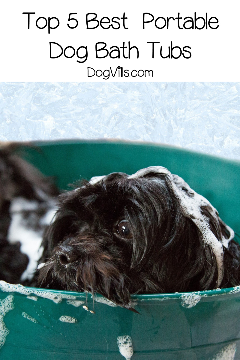 5 Best Portable Dog Baths (with Reviews)