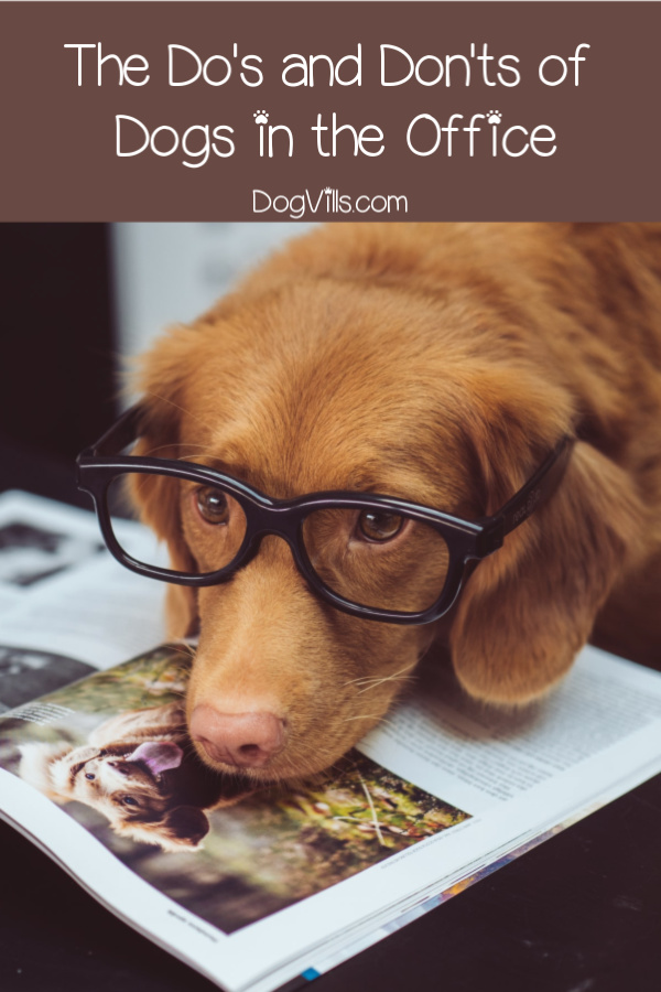 Planning to bring your dog to the office? Check out these do's and don'ts first!