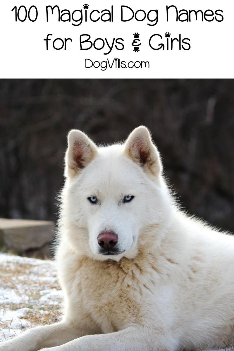 100 Magical Dog Names