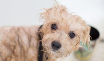 Have you noticed that your puppy is starting to smell, but you don't know the first thing about puppy bath time? Read on for our 9-step guide!