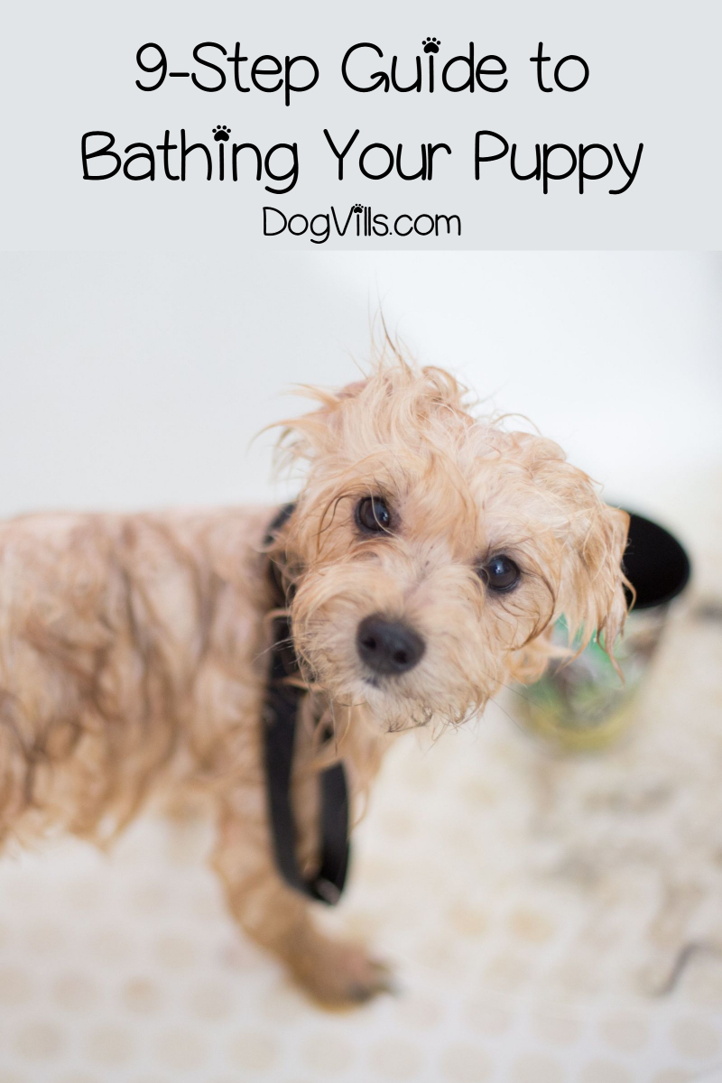 A 9-Step Guide on Bathing a Puppy