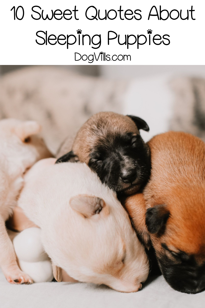 10 Darling Quotes About Sleeping Puppies & Dogs