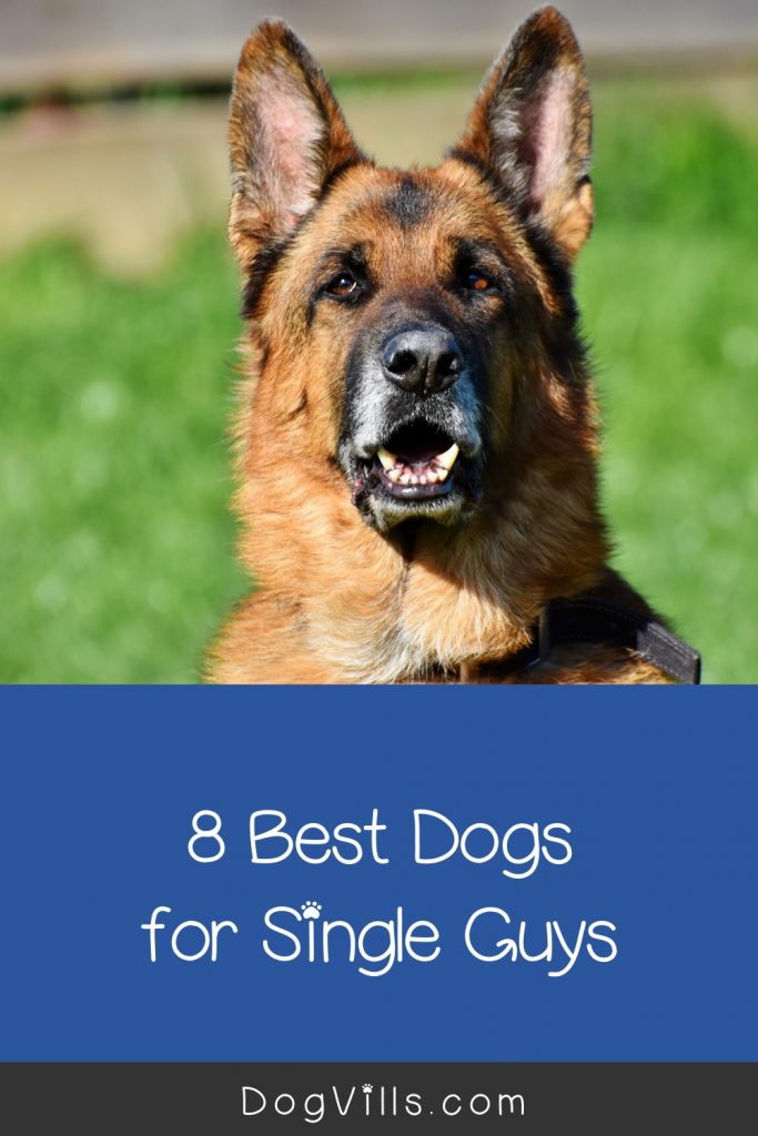 What are the best dogs for bachelors? Does that answer change if I'm living in an apartment? Read on to find the answers to both questions and more!