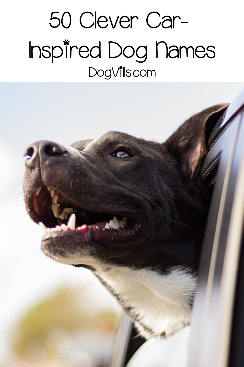50 Clever Car Inspired Dog Names