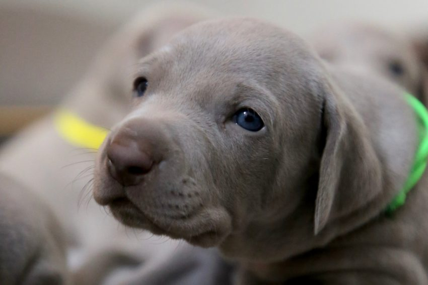 When can you take a puppy outside?