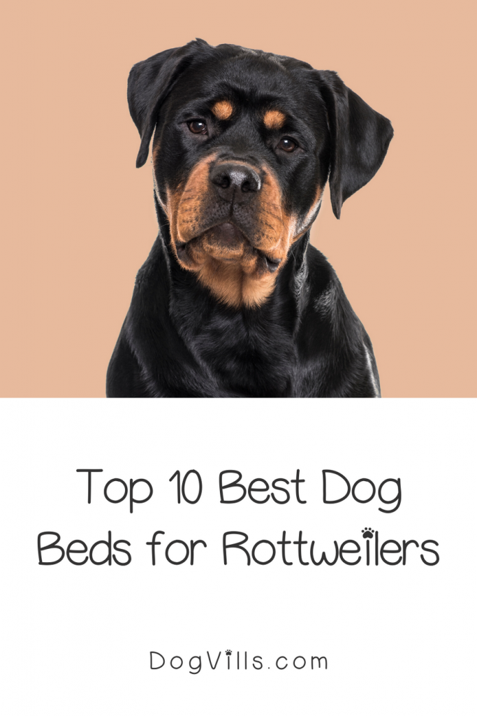 Looking for the best dog beds for rottweilers? We've got you covered! Take a look at our top 10 picks with complete reviews!