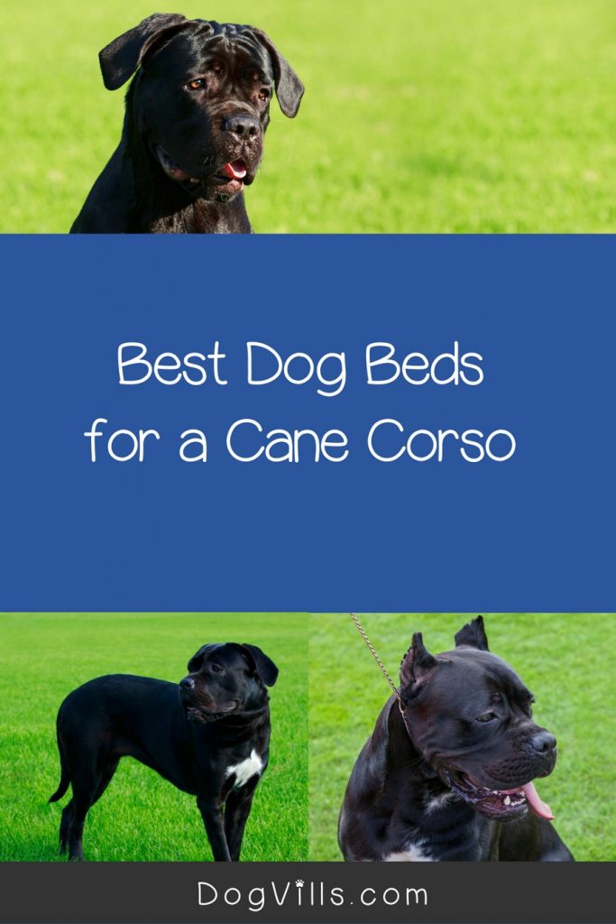 Finding the best dog beds for a Cane Corso can definitely be a challenge, but we've got you covered! Check out 10 that we think are just perfect!