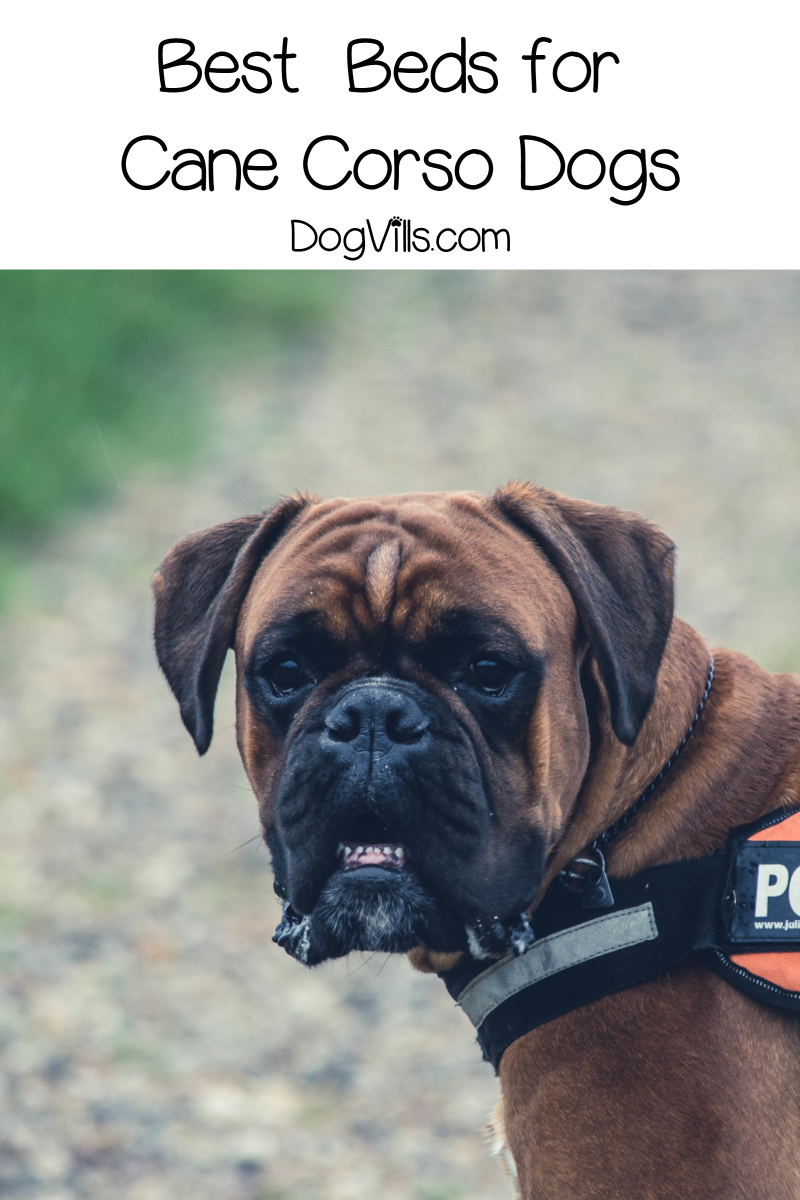 Top 10 Best Dog Beds for a Cane Corso