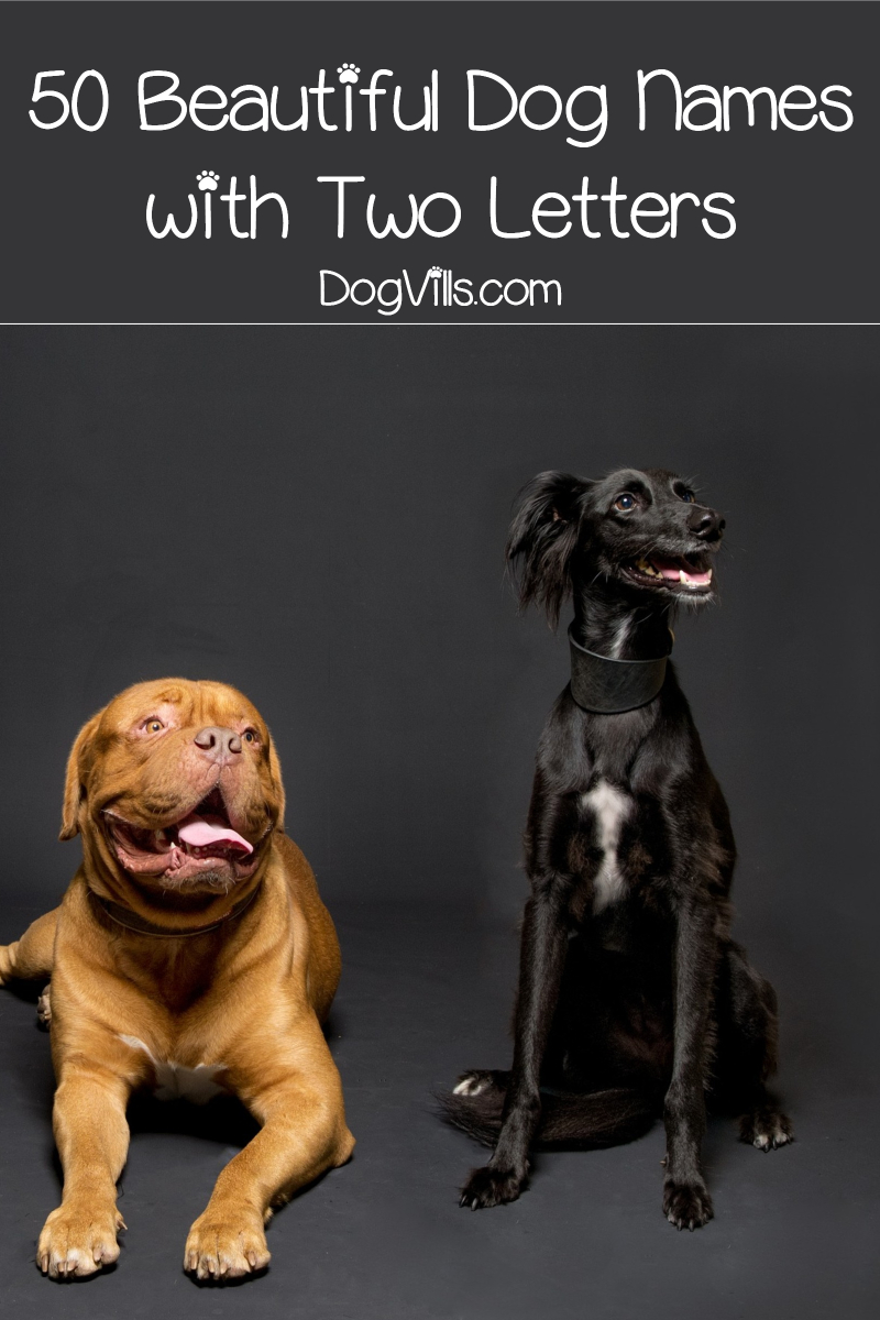 50 Beautiful Dog Names with Two Letters