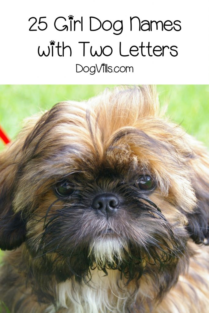 Wondering if there are any good dog names with two letters? Good news, there are! Check out 50 that we adore, with 25 each for boys and girls!