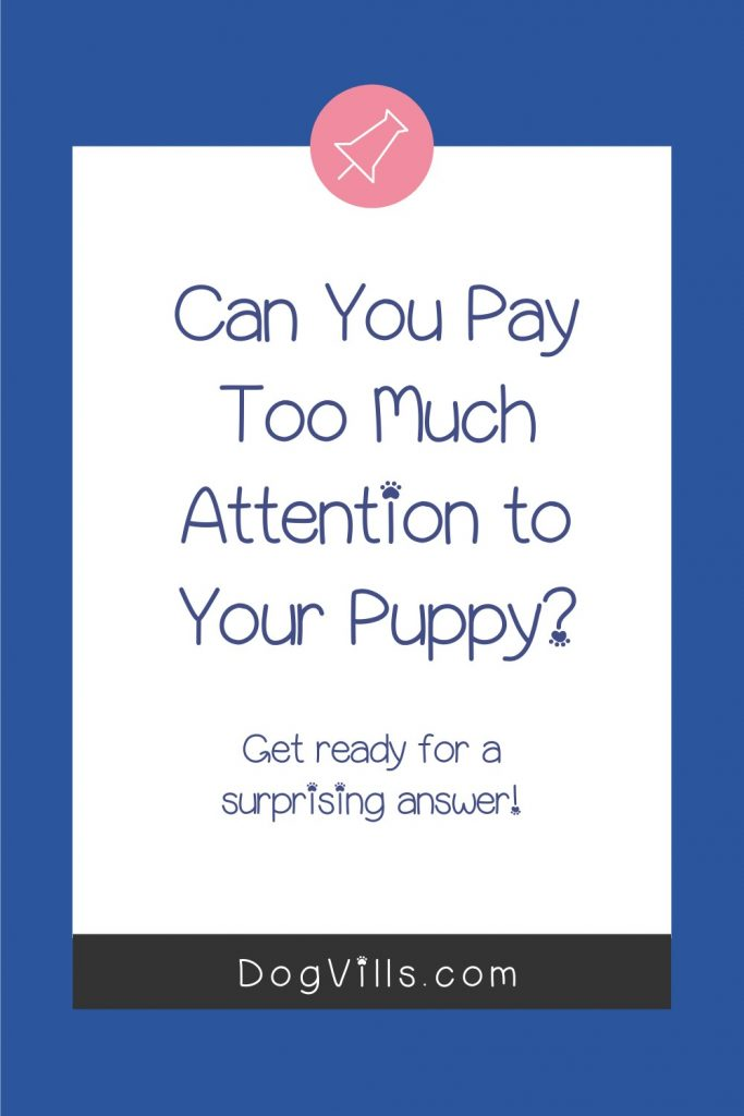 How much attention do puppies need a day? If you're worried that you're paying too much or too little attention to your new dog, read on to find out!