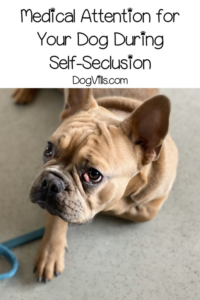 With self-seclusion recommendations in place for the foreseeable future, what do you do about vet care? Read on for some tips to ease your mind!