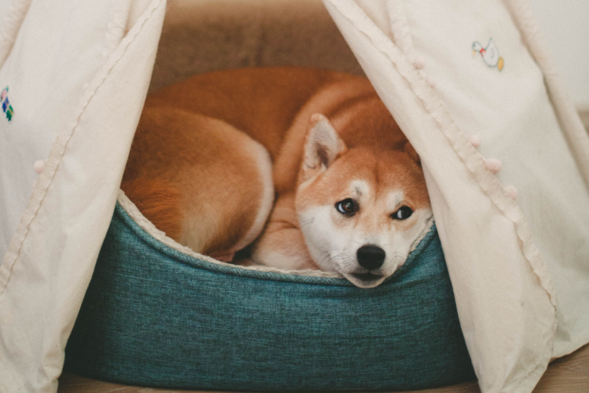 Cave (enclosed) dog beds are a great fit for any dog who loves tunneling under blankets. Take a look at our top 5 favorites for your pooch!