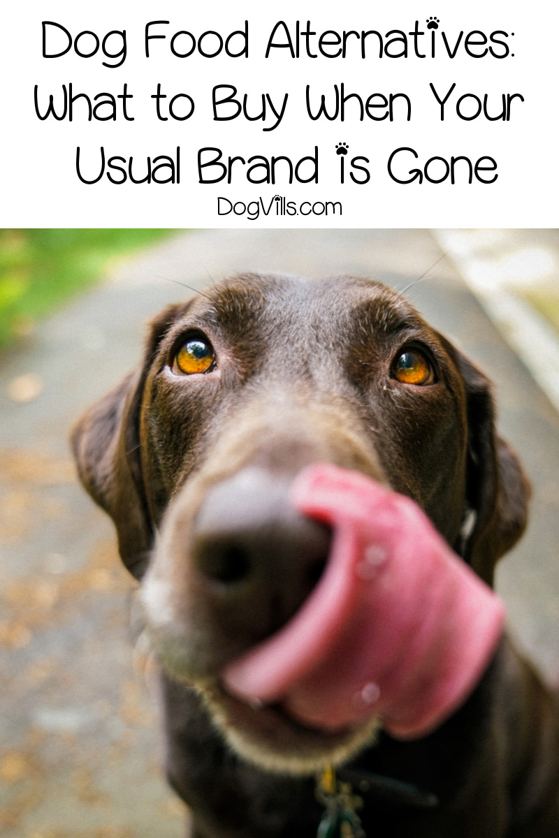 Dog Food Alternatives: What to Buy When Your Usual Brand is Gone