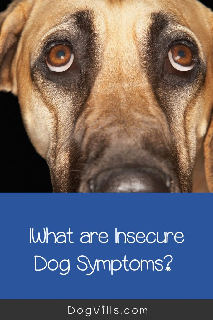 What are insecure dog symptoms? Read on to find out! Plus, get tips to help resolve dog insecurity.