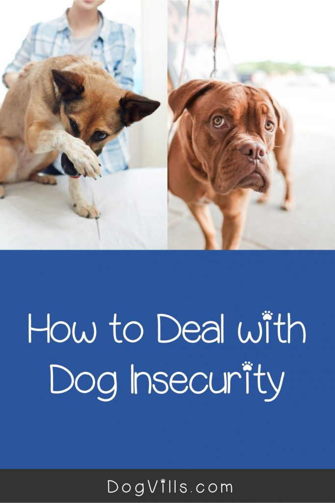 Dealing with an insecure dog? Read on to learn why it happens and how to help him.
