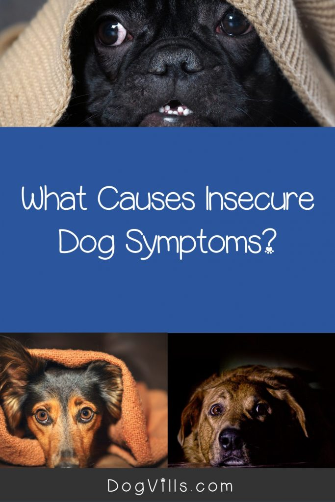 What causes insecure dog symptoms? Read on to find out! Plus, get tips to help resolve dog insecurity.
