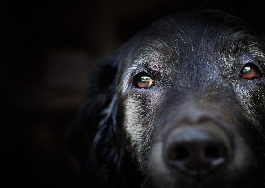 5 Things to Ask Before Adopting A Senior Dog