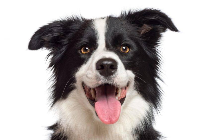Looking for some amazing black and white dog names for your new pup?  We've got you covered with just under 100! Check them out!
