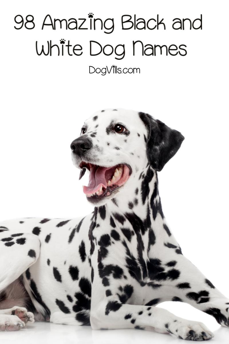 98 Amazing Black and White Dog Names