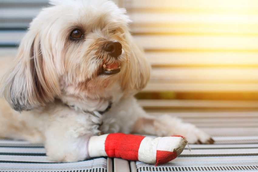 There are several methods for easing pain in your dog after an injury or surgery. These tips will you comfort your dog in pain at home.