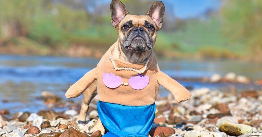 Searching the seven seas for magical mermaid dog names? Your journey ends here! We have 90 for both mermaids and mermen pups! Check them out!
