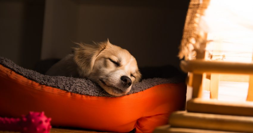 If you looking to buy personalized dog beds for your pup, you've come to the right place. Learn what to look for in one, plus check out our 5 favorites.