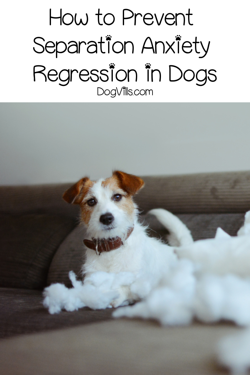 Separation Anxiety Regression: Are We Undoing All Our Hard Work?