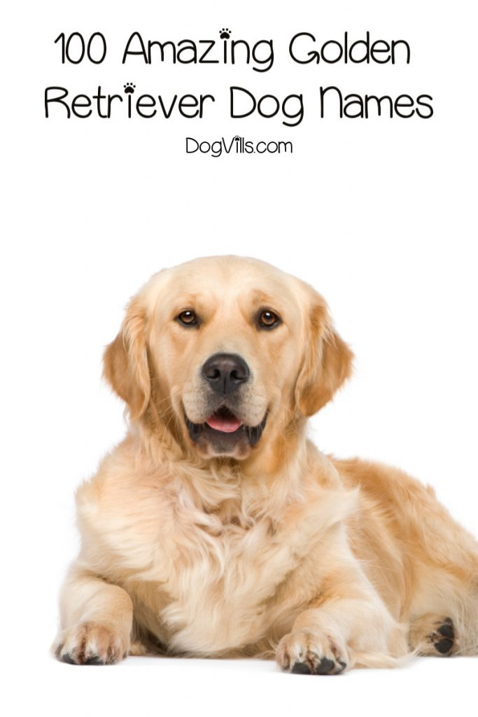 100 Amazing Golden Retriever Dog Names