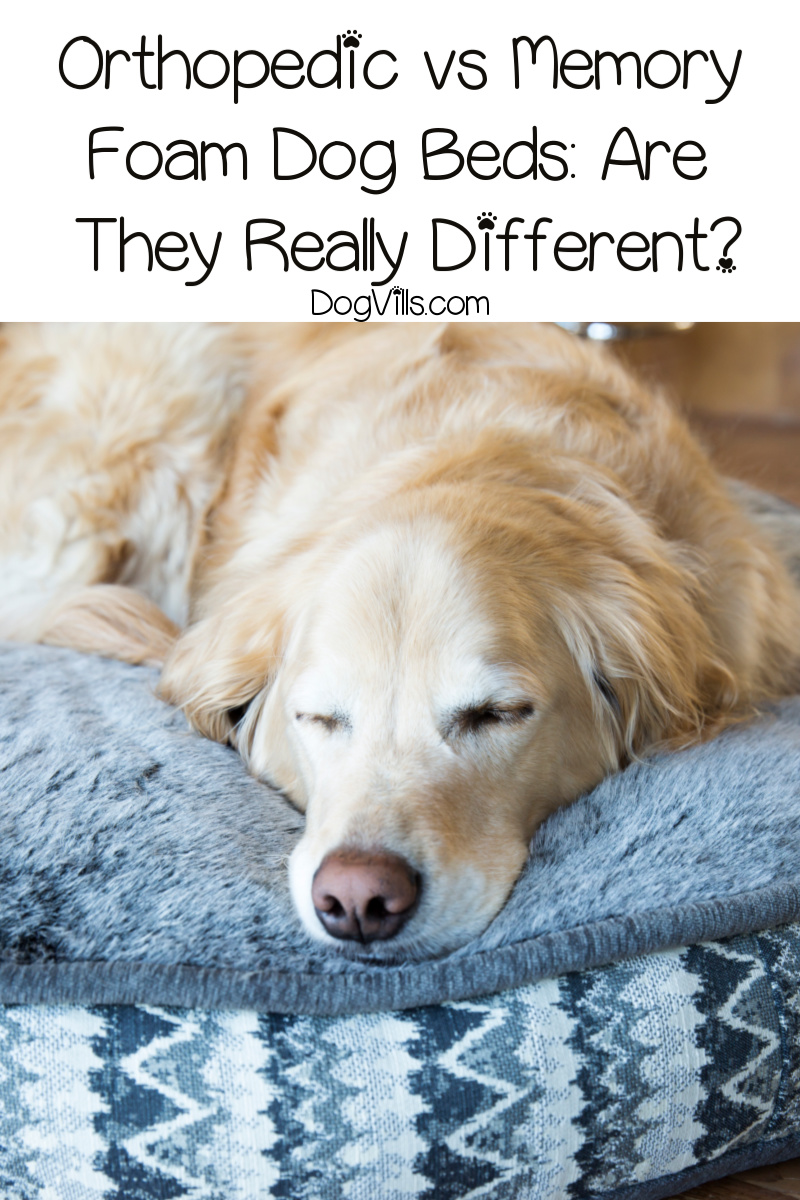 Orthopedic vs Memory Foam Dog Beds: Are They Really Different?