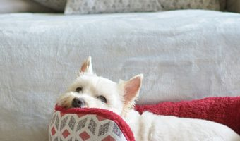 Does my dog need a bed? If I have multiple dogs, do they each need their own? How do I choose the best bed? Read on for all the answers!