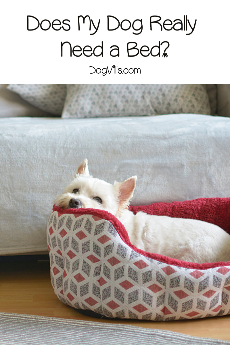 Are Dog Beds a Worthwhile Investment or a Total Waste of Money?