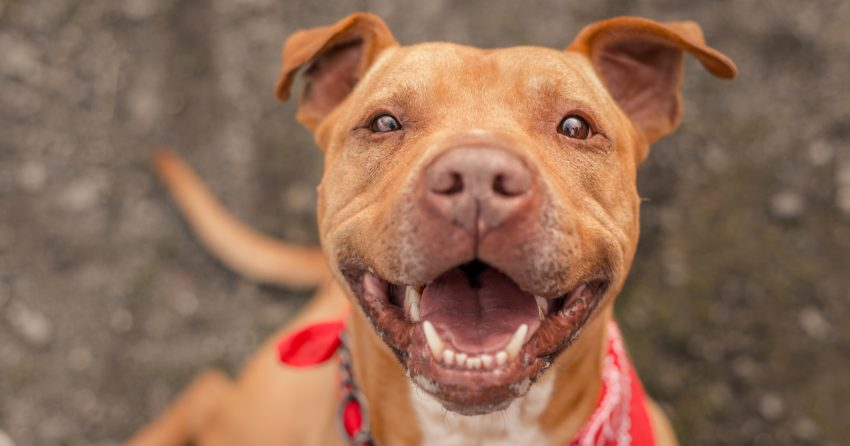 Dog names meaning second chance make for some of the most beautiful ideas for rescue dogs. Check out 84 of our favorites for male & female dogs.