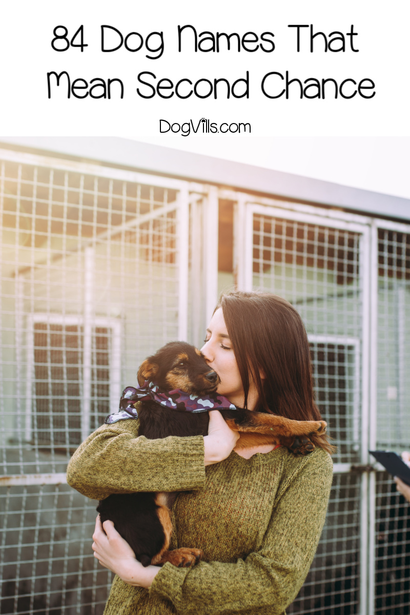 84 Beautiful Dog Names Meaning Second Chance