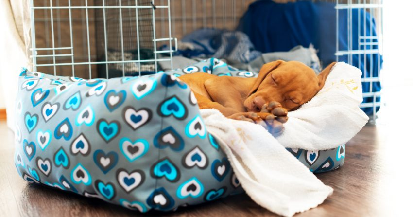 "Are you wondering ""does my dog need a bed in his crate?"" How about a puppy? What else should go in a crate? Read on for all the answers!"