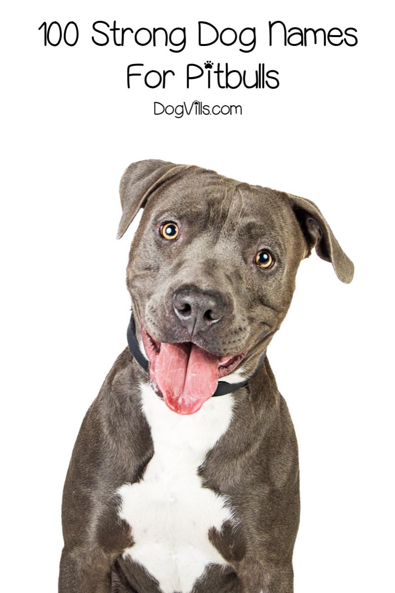 100 Strong Dog Names For Pitbulls