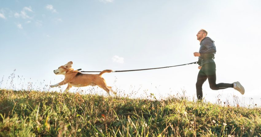 If your favorite activity is jogging, then you can choose one of these 96 dog names for runners for your pup! Check them out!