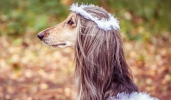Looking for dog names meaning miracle to celebrate your miraculous hound? Check out 96 ideas that have us swooning, including plenty for both boys & girls.