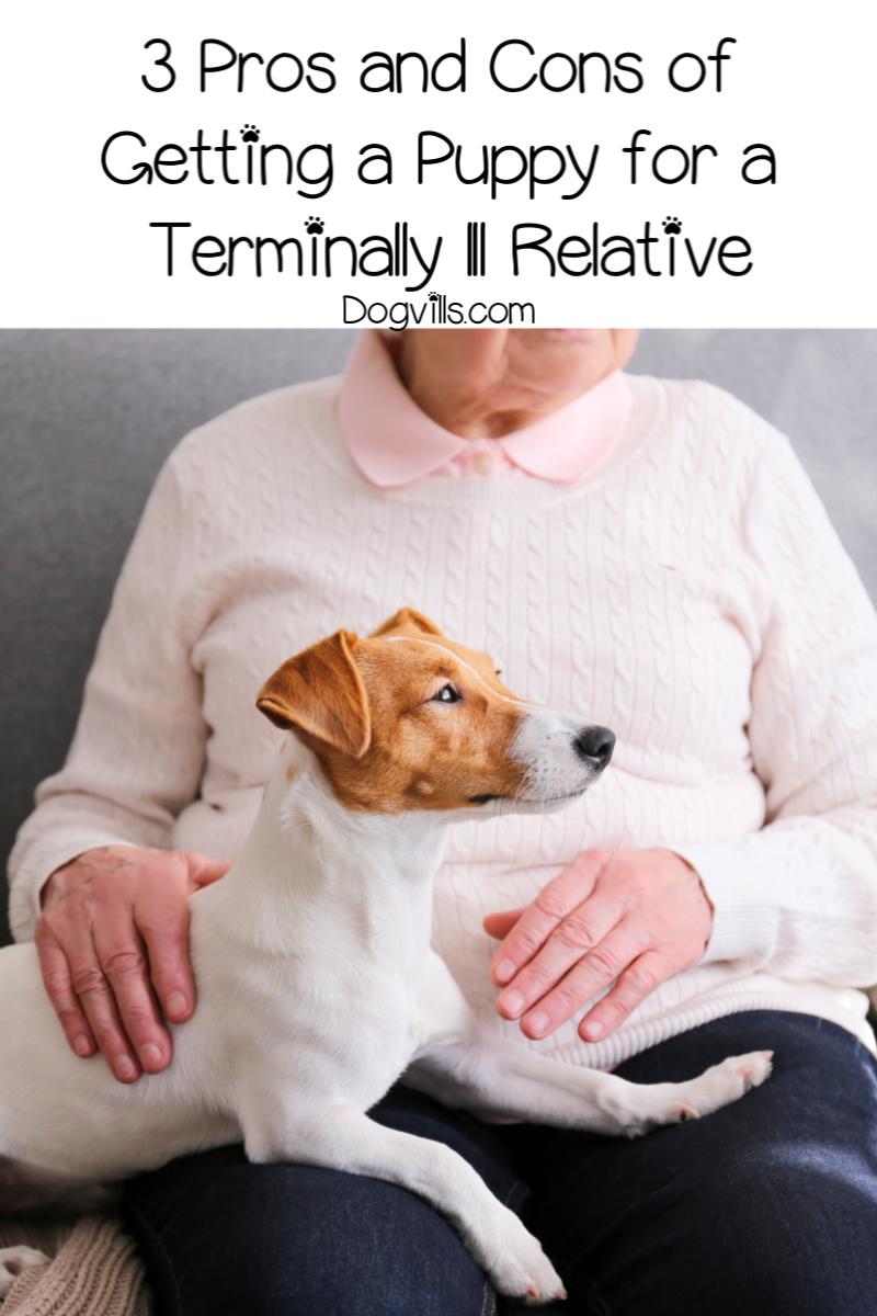 3 Pros and Cons of Getting a Puppy for a Terminally Ill Relative