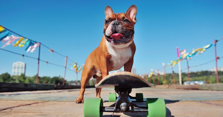 Looking for some fun skater names for your rad new pup? Check out 100 brilliant ideas, with 50 each for male and females!