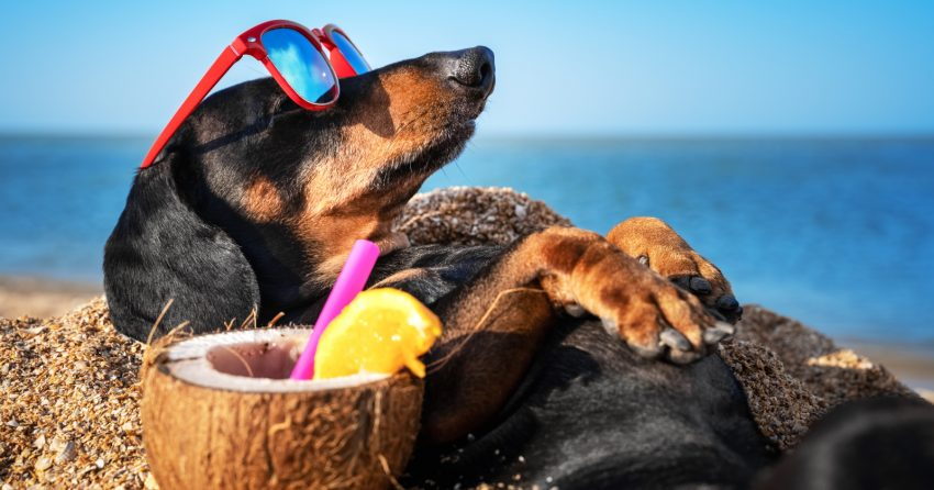 This list of 76 sunny dog names will come in handy when you get yourself a new pup! We all need a little sunshine, right? Check them out!