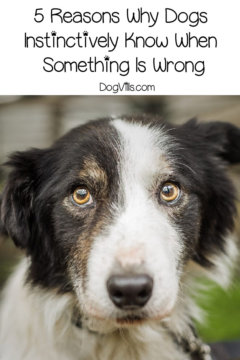 5 Reasons Why Dogs Instinctively Know When Something Is Wrong