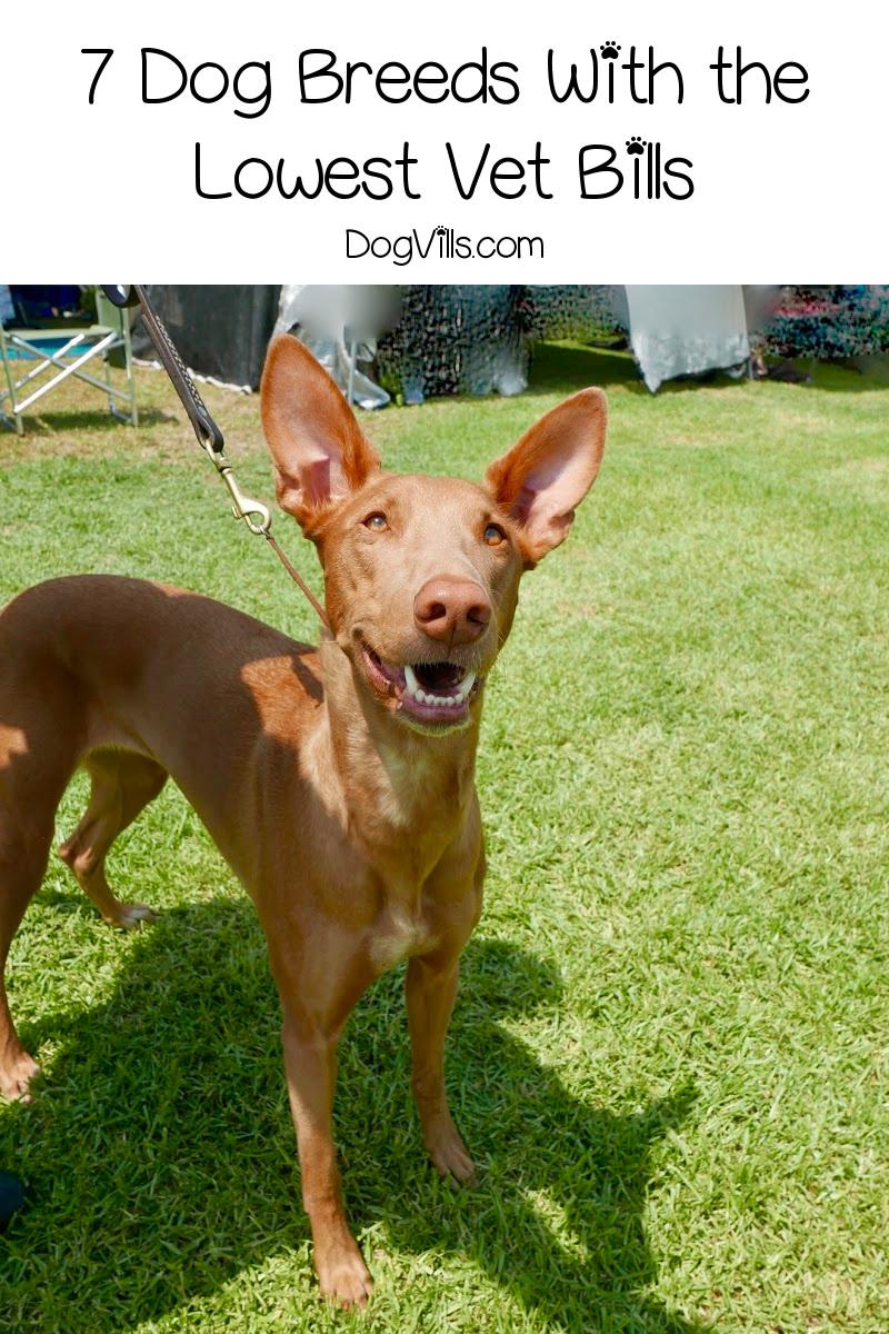 7 Dog Breeds With Low Vet Bills