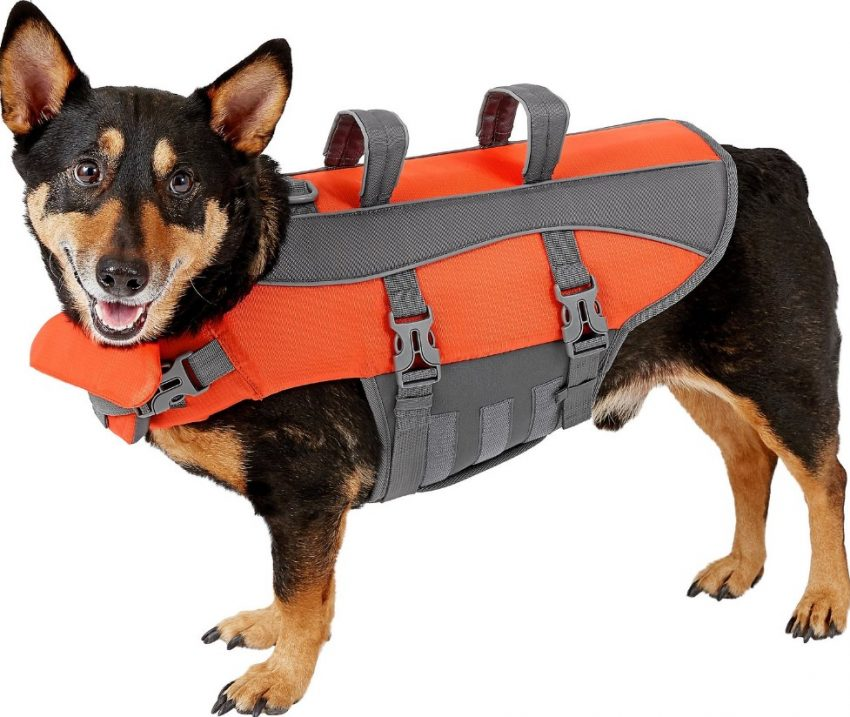 Frisco life jacket outdoor fun with dogs