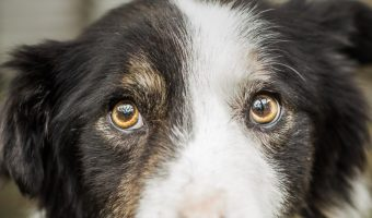 These beautiful dog names meaning survivor are just perfect for a rescue dog with the heart of a warrior. Check them out!