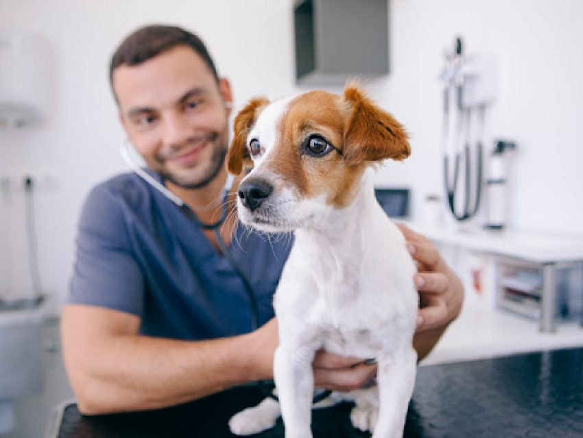 Wondering why your dog yelps when touched? It's a scary thing, hearing your dog cry out in pain! Learn the reasons & find out what to do about it.