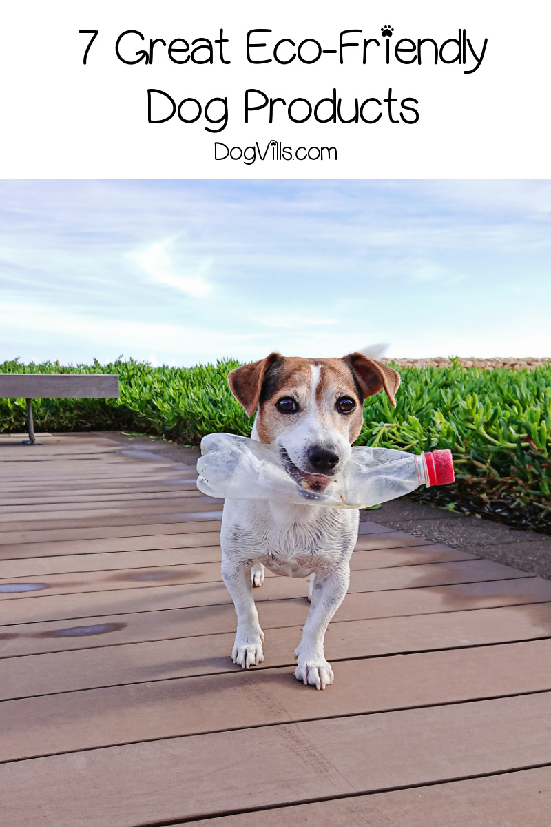 Top 7 Best Eco-Friendly Dog Products